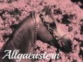 allgaeustern