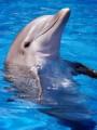 dolphin836